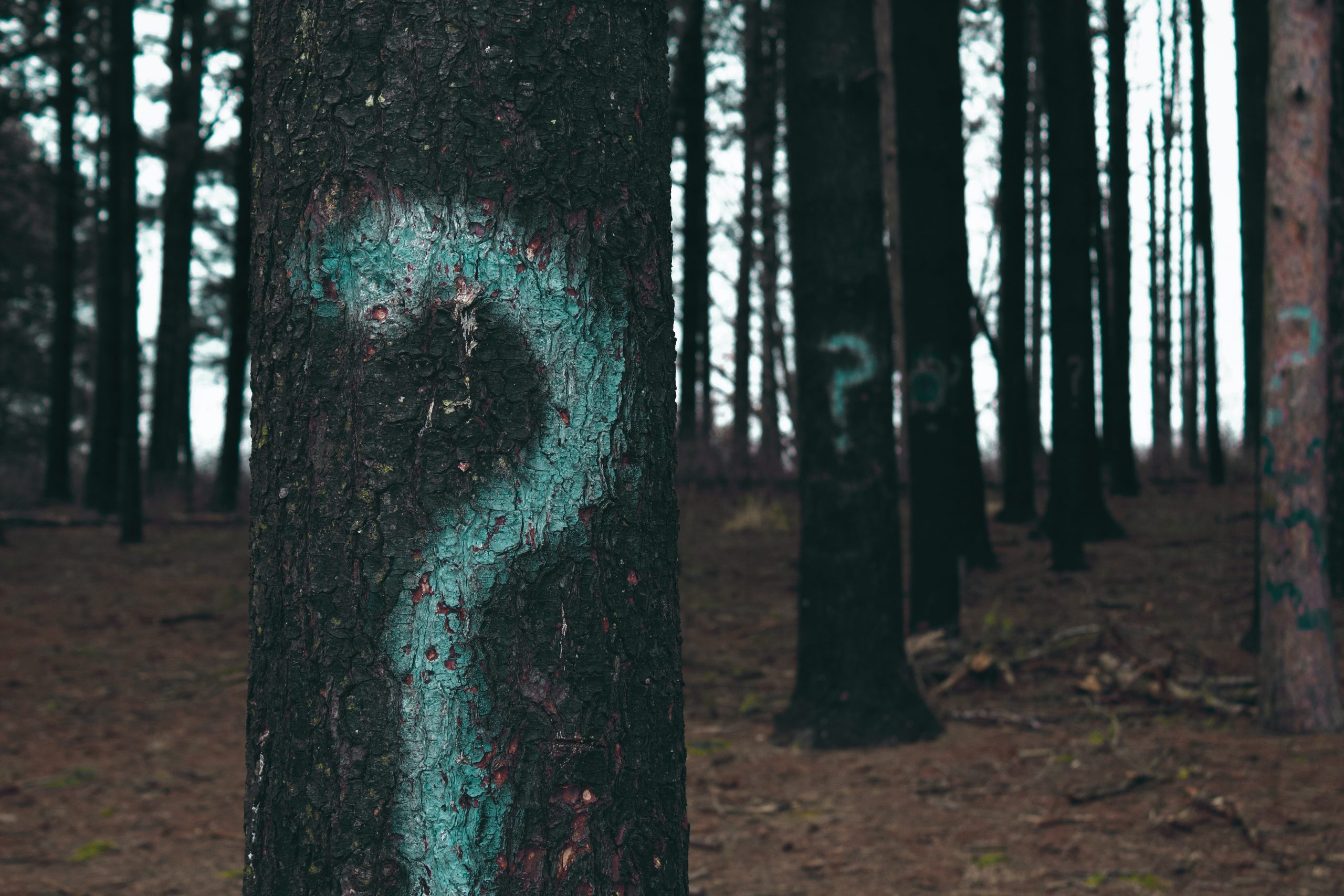 Trees with question mark on it